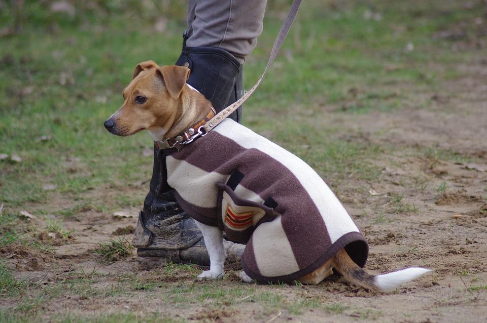 L'importance de l'assurance pour animaux de compagnie